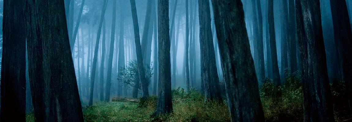 木のポテンシャルを最大限に引き出す家づくり